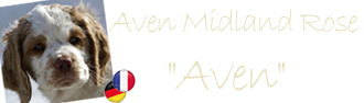 Here you can find the album of Aven